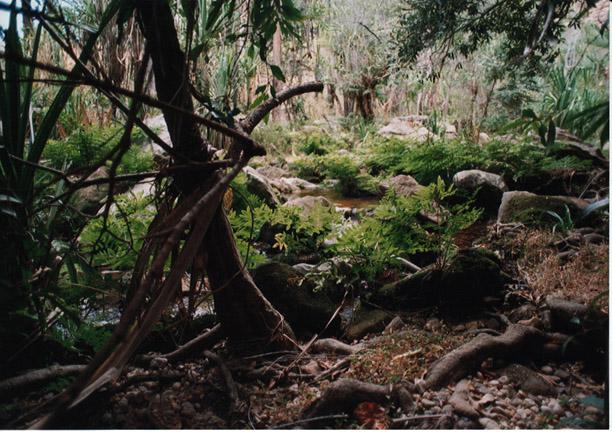 Rivière dans l'Isalo